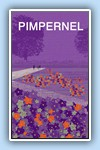 scarlet pimpernel purple